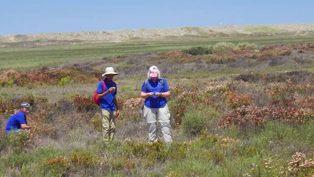 4-H GIS Leadership team member Dylan Dodson (center) collects sea lavender location data using Collector for ArcGIS.
