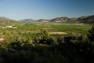 Much of the land outside the cities in the Valencia region is suited for agriculture.